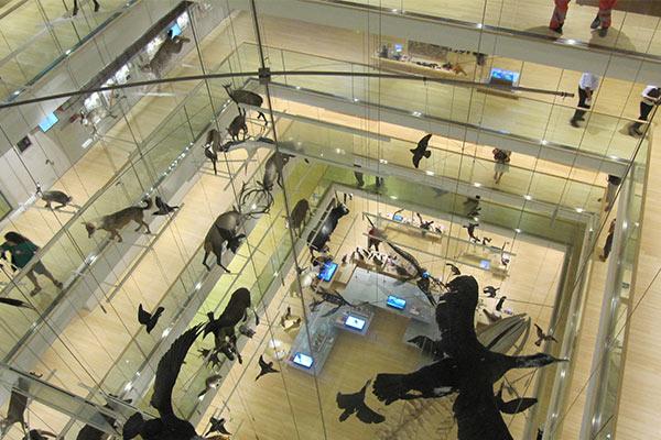 Allestimento MUSE Trento - Progetto in Corian® Desing